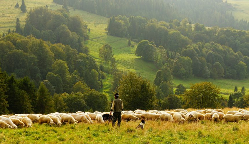 Organising the meat supply chain