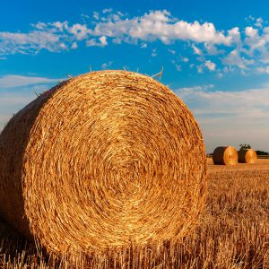Roadmap to sustainable agriculture